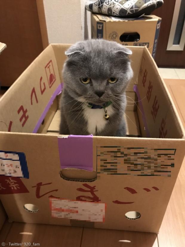 자꾸 어린이 집사의 숙제를 방해하다간 상자행이 될 수도 있다.