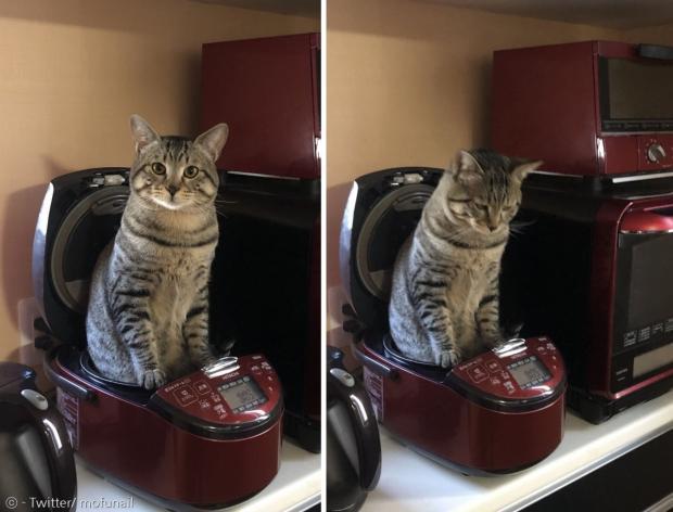 아침부터 따뜻한 전기밥솥 안에 앉아있는 고양이 푸치.