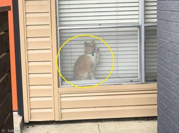 고양이 조지(노란 원)가 집사를 보고도 못 본 척 딴청을 부렸다.