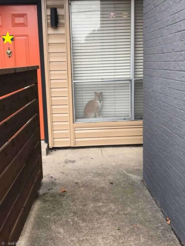 집사가 고양이를 찾으러 다니다가 이웃집 창가에 앉은 조지와 눈이 마주쳤다.