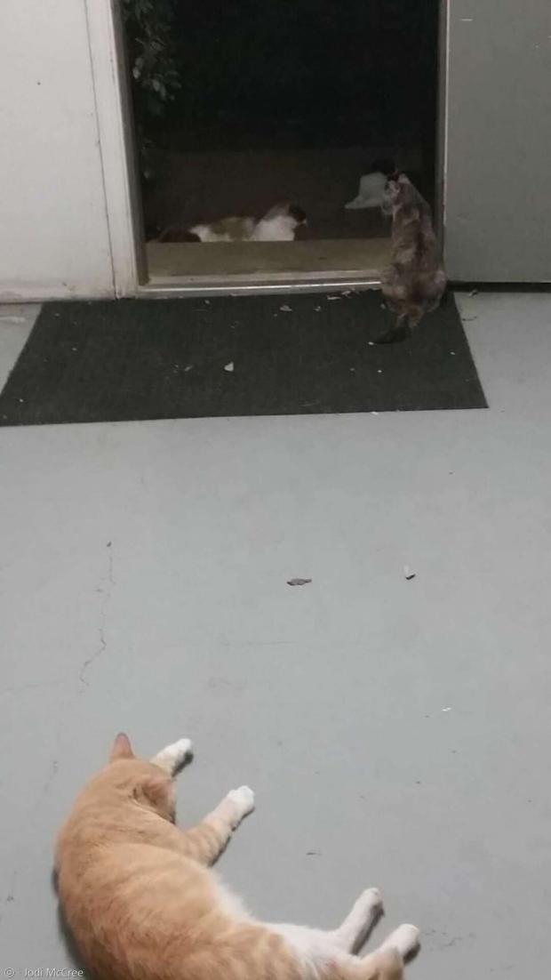 아파트단지를 내 집처럼 돌아다닌 외향성 고양이 조지(맨 아래쪽). [출처: 조디 맥크리]