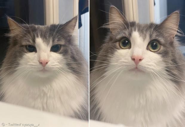 집사가 고양이를 보지도 않고 게임만 할 때(왼쪽)와 고양이 이름을 불러줬을 때(오른쪽) 고양이 나오야의 눈빛이 180도 달라진다. [출처: Twitter/ nyaoya__x]