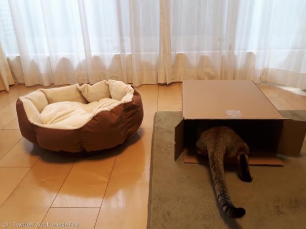다른 집사도 공감했다. 싸든 비싸든 침대는 고양이에게 무용지물이다. [출처: Twitter/ AzulCeleste722]