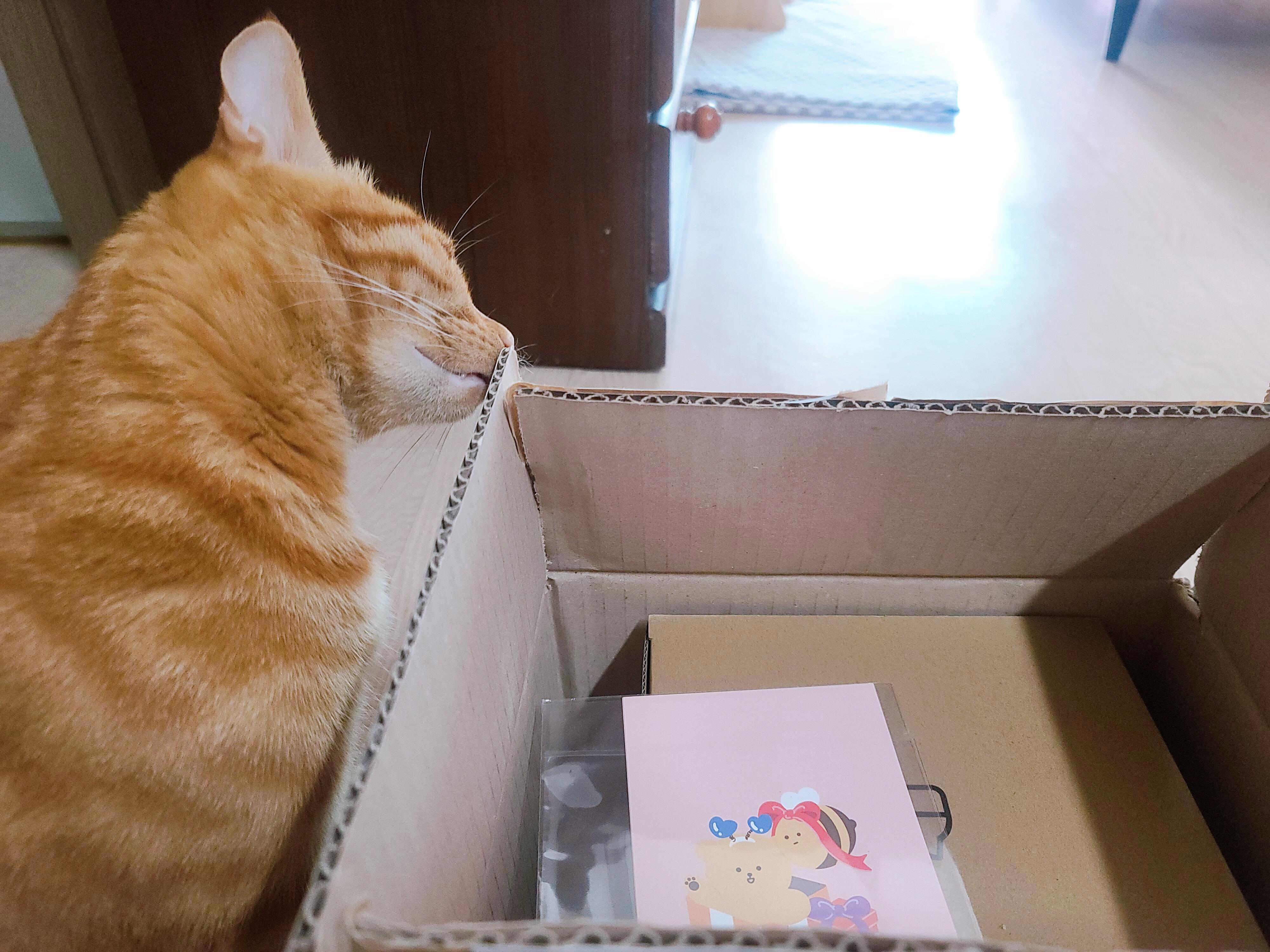 고양이 자동급수기