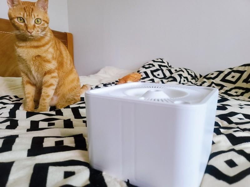 고양이 자동급수기 추천