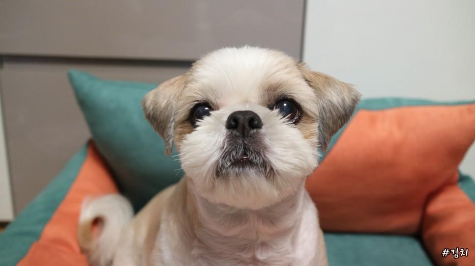 강아지 관절영양제 추천