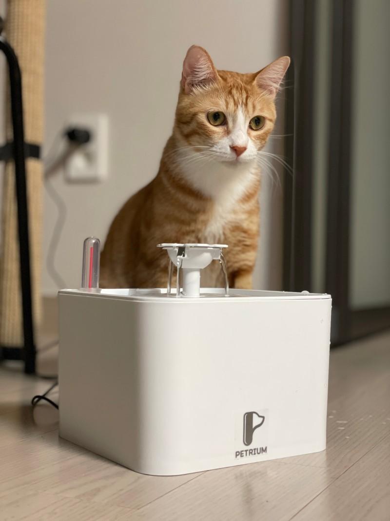 고양이 정수기 추천